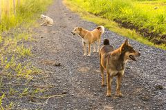 Group of dogs at the countryside. Group of dogs with warm sunshine in the countryside royalty free stock images