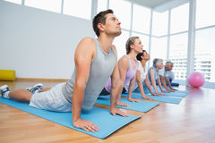 Group doing cobra pose in row at yoga class Stock Image
