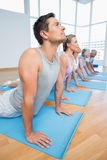 Group doing cobra pose in row at yoga class Royalty Free Stock Image