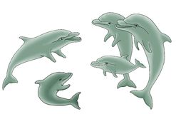 Group of dolphins illustration Stock Photography