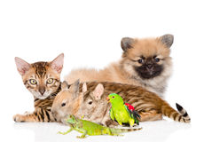 Group of domestic animals.  on white background.  Stock Image