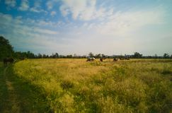 46-Group dos cavalos Fotografia de Stock