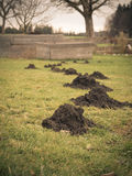 Group of dreaded mole hills in a row. Photo shows a group of dreaded mole hills in a row Royalty Free Stock Photo