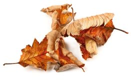 Group of dried fall leaves Stock Photography