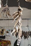 Several dried fish hang on rope stock photos