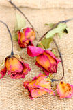 Group of dried withered roses and petals on sackcloth bag. Stock Photography