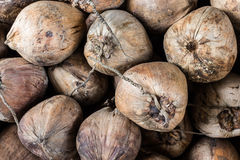Group of dry coconut . Stock Photography