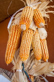 Group of dry corn Stock Image