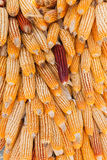 Group of dry corn Stock Photos