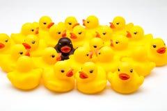 Group of ducks Stock Photos
