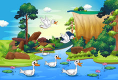 A group of ducks at the river in the forest Stock Photo