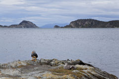 Group of ducks at tierra del fuego national park. Argentina Stock Photo