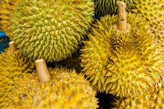 Group of durian Royalty Free Stock Image