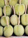 Group of durian. Stock Photos