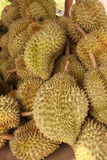 Group of durian Royalty Free Stock Images