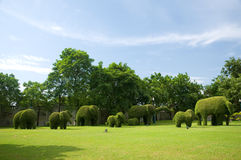 Group of dwarf look like elephant. In the park at Bang Pa-In Palace Ayutthaya Thailand Royalty Free Stock Image