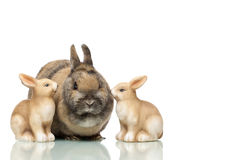Group of Easter bunnies sitting together stock photography