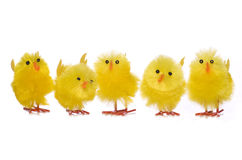 Group of easter chick decorations cutout Stock Photography