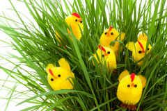 Group of easter chickens in a grass Stock Photography