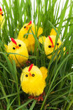 Group of easter chickens in a grass Royalty Free Stock Photos
