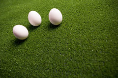Group of eggs Stock Image