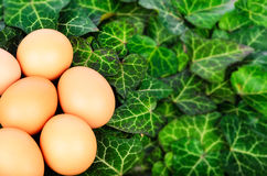 Easter eggs and ivy leaves Stock Photos