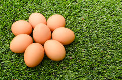 Group of Eggs on the grass Stock Photography