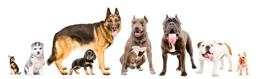 Group of eight cute dogs royalty free stock images