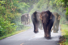 Group Elephant on the curve way landscape Royalty Free Stock Photos