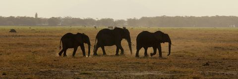 Group of Elephant seens backlit Royalty Free Stock Photography