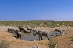 Group of elephants Stock Photo