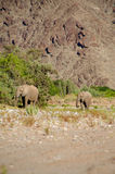 Group of elephants Stock Image