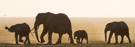 Group of elephants walking on the savannah. Africa. Kenya. Tanzania. Serengeti. Maasai Mara. An excellent illustration Royalty Free Stock Photography