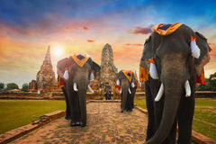A Group of elephants at Wat Chaiwatthanaram temple in Ayuthaya Historical Park, a UNESCO world heritage site royalty free stock images