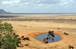 Group of elephants at a waterhole Stock Image