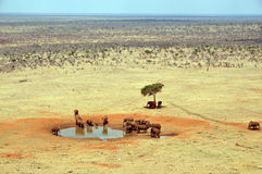 Group of elephants at a waterhole. A large group of elephants at a waterhole in the african national park Tsavo East royalty free stock photography
