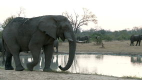 Group of elephants zoom out. Video of group of elephants zoom out stock video footage