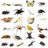 Group of european insects Royalty Free Stock Image