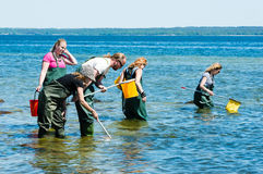 Group examining water with ring nets Stock Photos