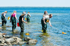 Group examining water with ring nets Stock Photography