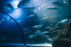 Group of exotic fish in a large fish tank at a water park royalty free stock photo