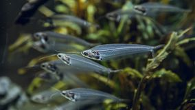 Group of exotic gray fishes stock photo