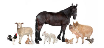 Group of farm animals. In front of a white background Royalty Free Stock Photo