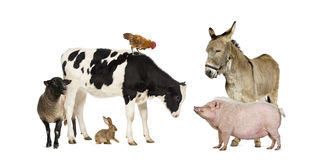 Group of farm animals. Isolated on white Royalty Free Stock Image