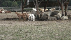 Group of farm animals. Variety of farm animals. Group of farm animals stock footage