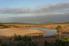 Group of female kudu antelopes at waterhole in African savannah. Safari game drive in South Africa stock images