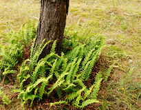 Group of fern Royalty Free Stock Photos