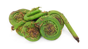 Group of fiddleheads Royalty Free Stock Photos