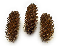Group of fir cones Royalty Free Stock Photography
