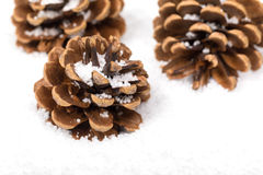 Group of fir cones in the snow Stock Photography